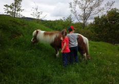 Gita con i pony