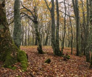 Foresta (G. Giacomini)