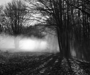 Nebbie in foresta (A. Ruini)