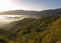 Paesaggio autunnale (G. Giacomini)